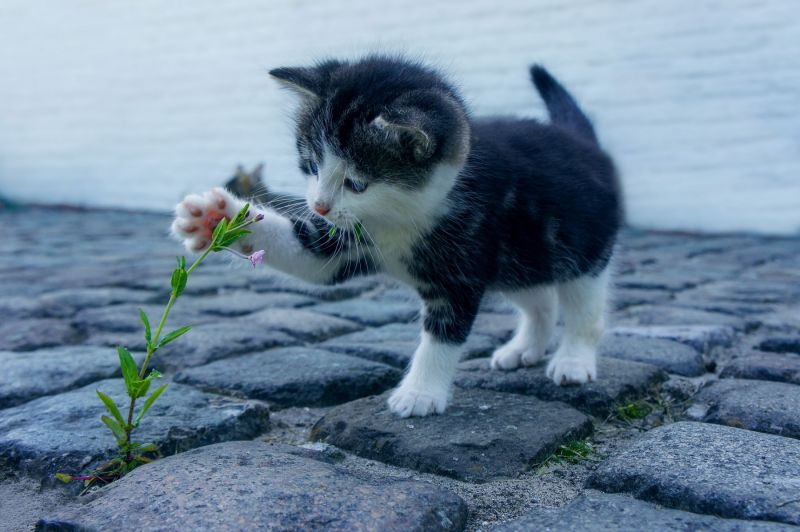 kitten is walking