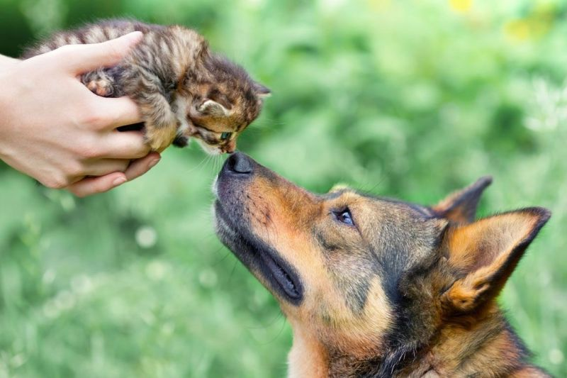 dog with a kitten